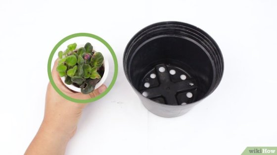 Immagine titolata Grow Potted Plants Step 6