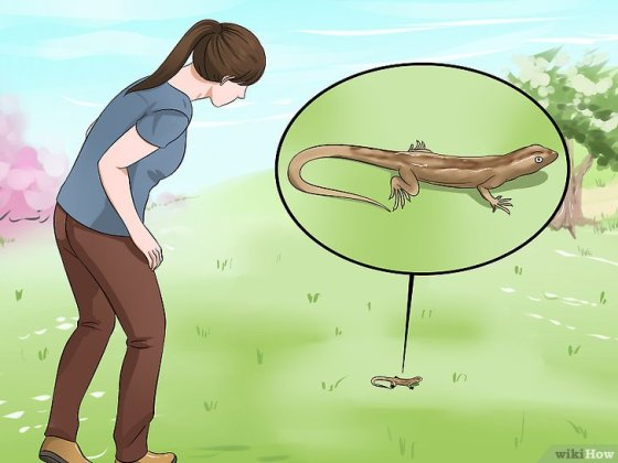 Immagine titolata Catch a Lizard Without Using Your Hands Step 11