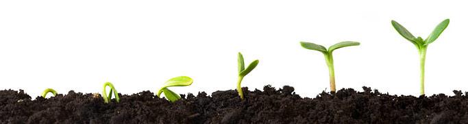 La Preparazione Del Terreno Per Lorto Come Fare Orto