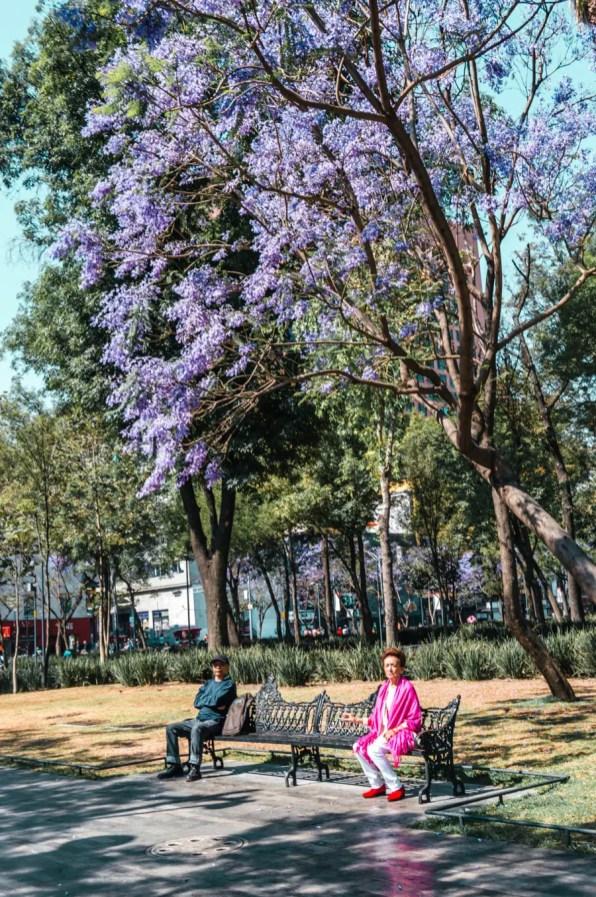 Woman under a Jacaranda Tree in Alameda Central
