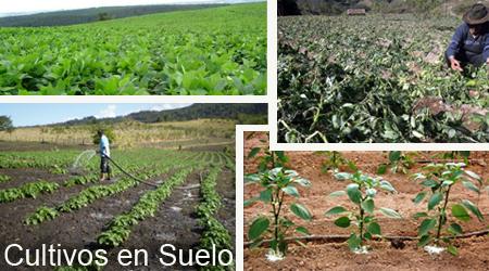 cultivos_en_suelo
