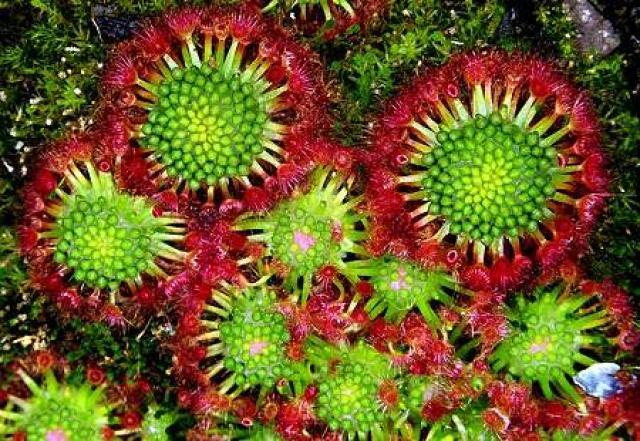 plantas-formas-geometricas (12)
