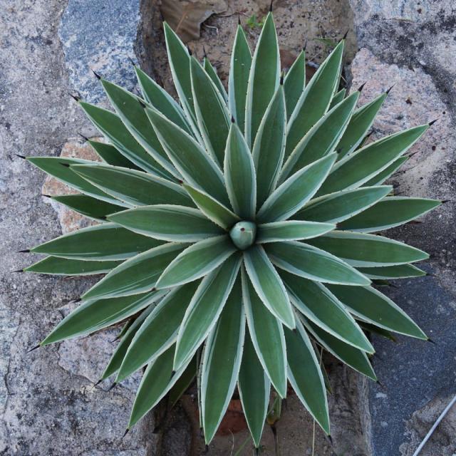 plantas-formas-geometricas (15)
