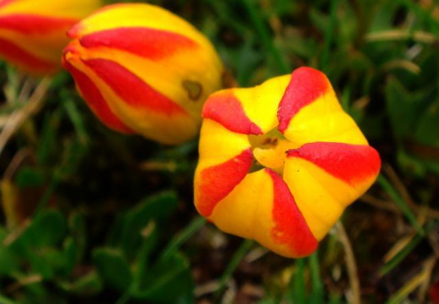 plantas-formas-geometricas (2)