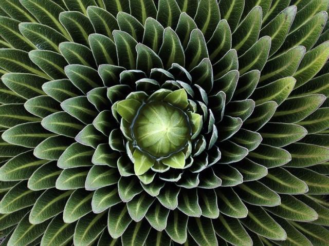 plantas-formas-geometricas (5)