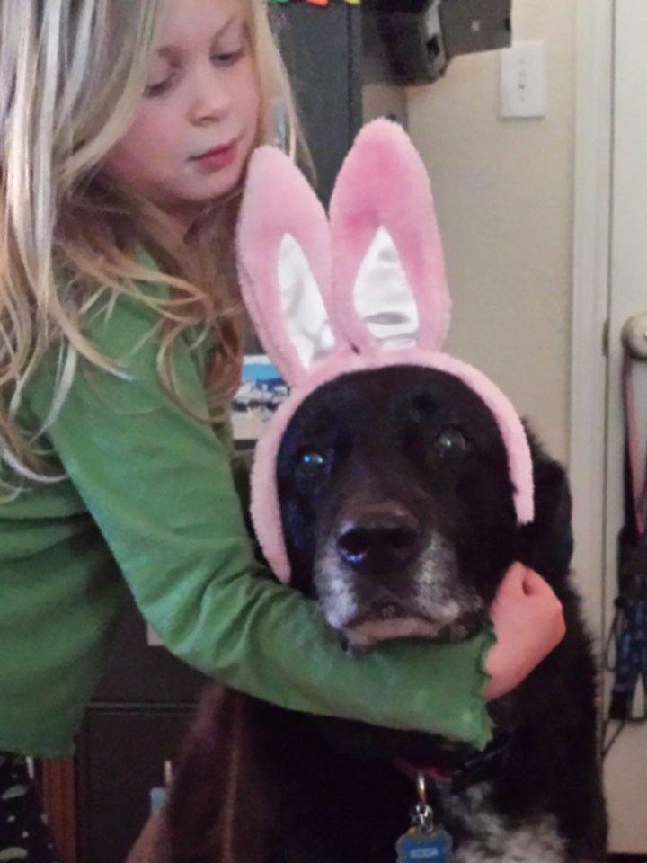 family dog tribute