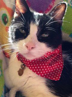 cat memorial tribute
