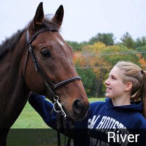 horse loss tribute