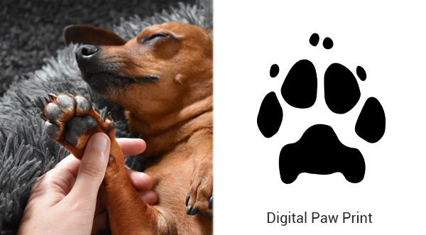digital paw print created from a photo of your pet's paw