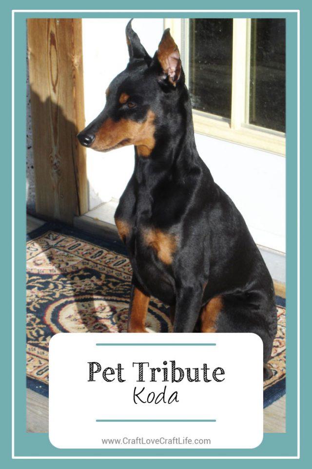 loss of minature pinscher dog