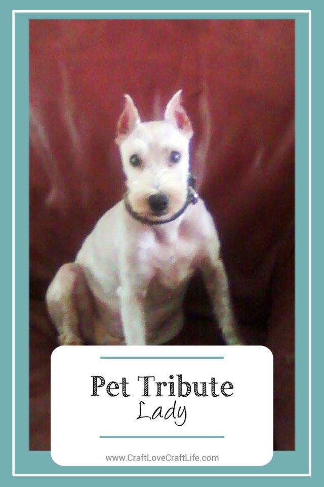 senior dog loss