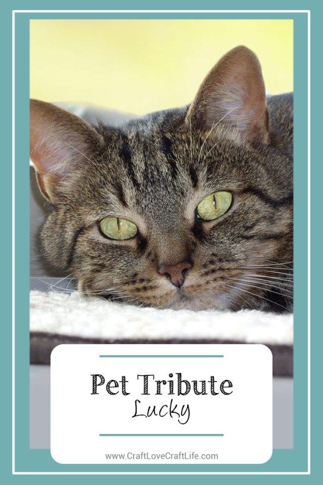 senior cat loss