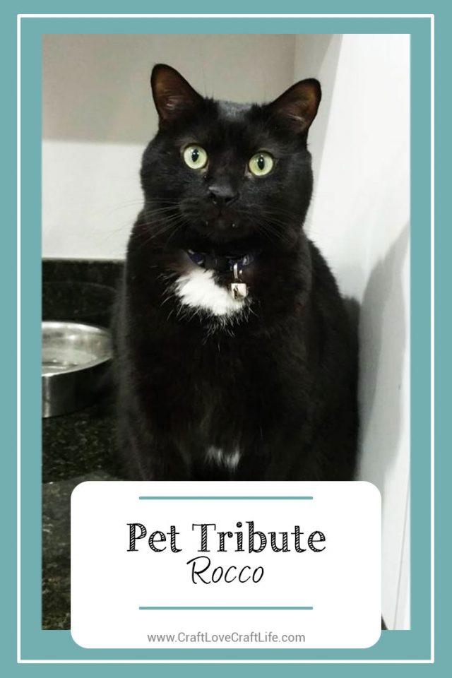 black cat loss