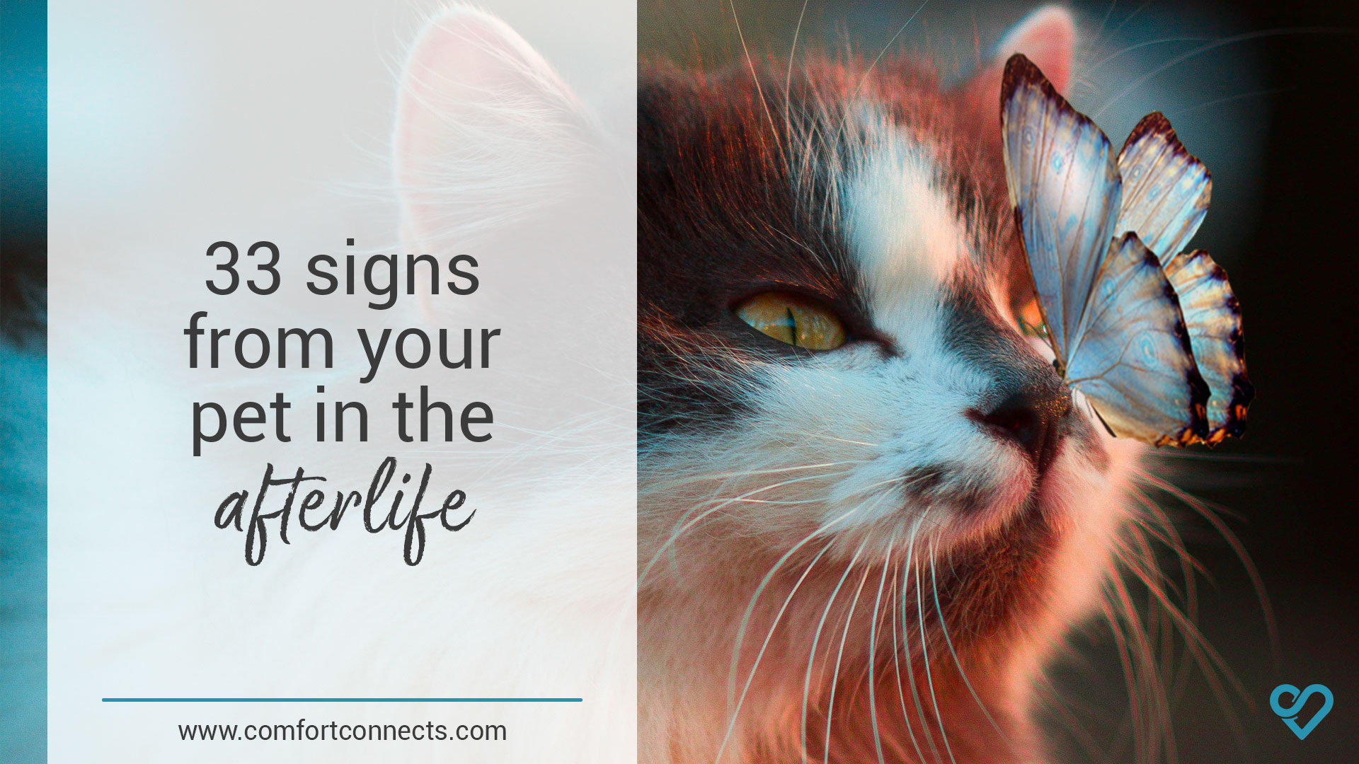 33 Afterlife Signs from your Pet