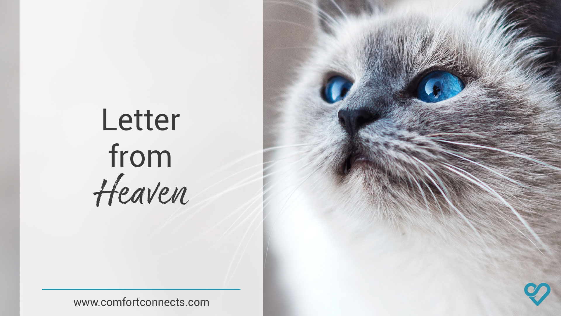 Letter from Heaven (Cat)