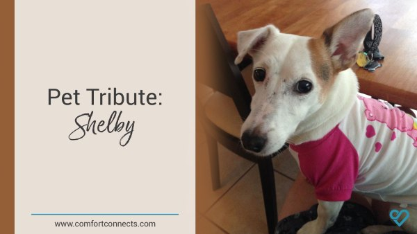 Pet Tribute: Shelby
