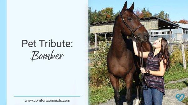 Pet Tribute: Bomber