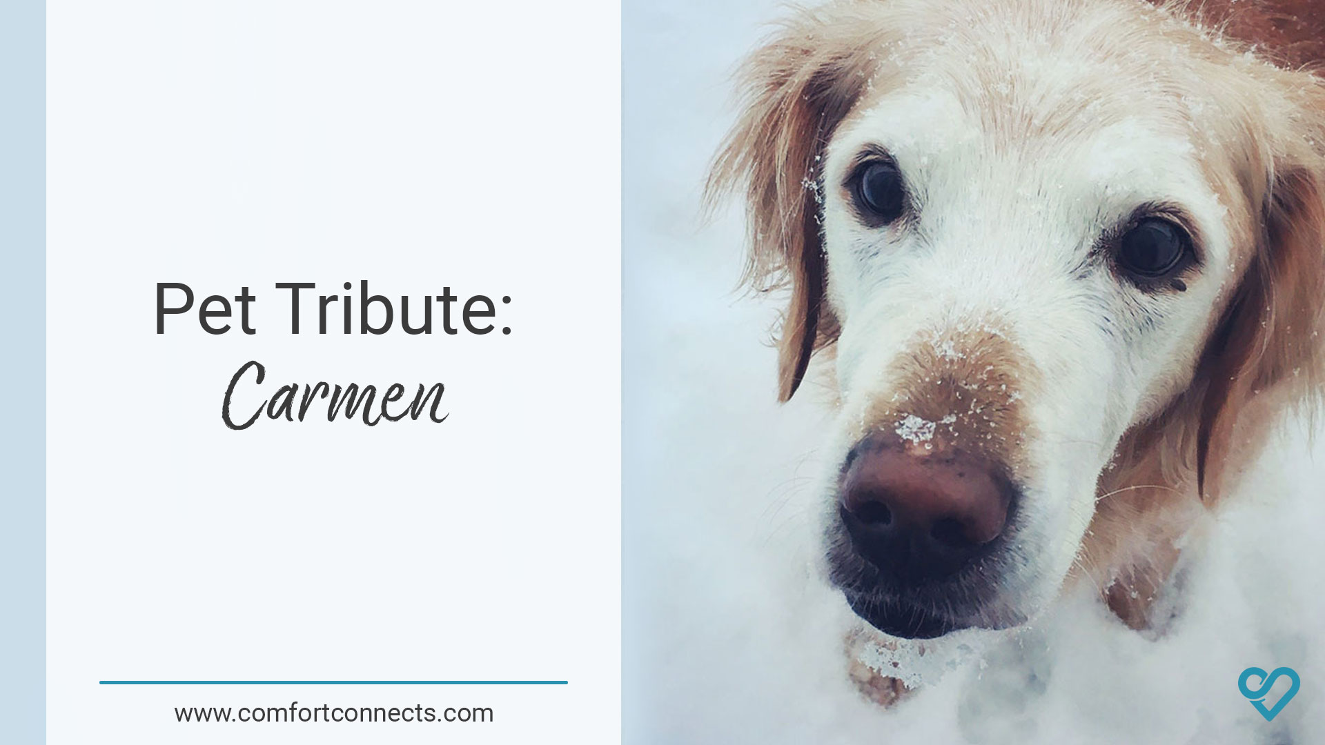 You are currently viewing Pet Tribute: Carmen