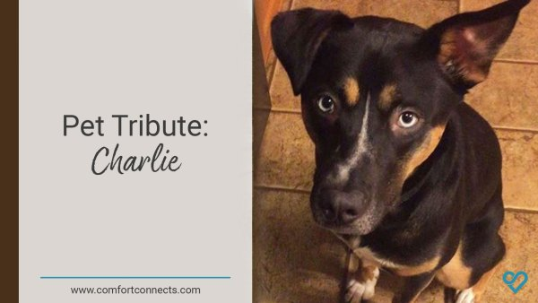 Pet Tribute: Charlie