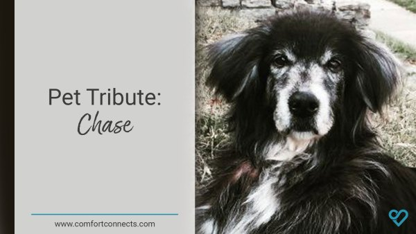 Pet Tribute: Chase
