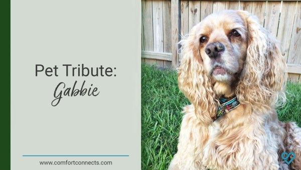 Pet Tribute: Gabbie