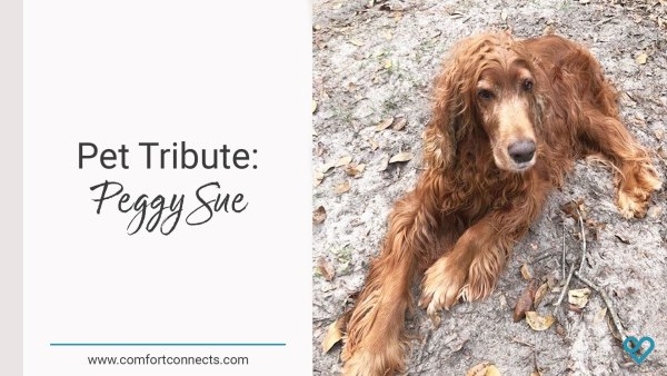 Pet Tribute: Peggy Sue