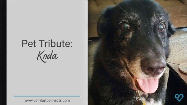 Pet Tribute: Koda