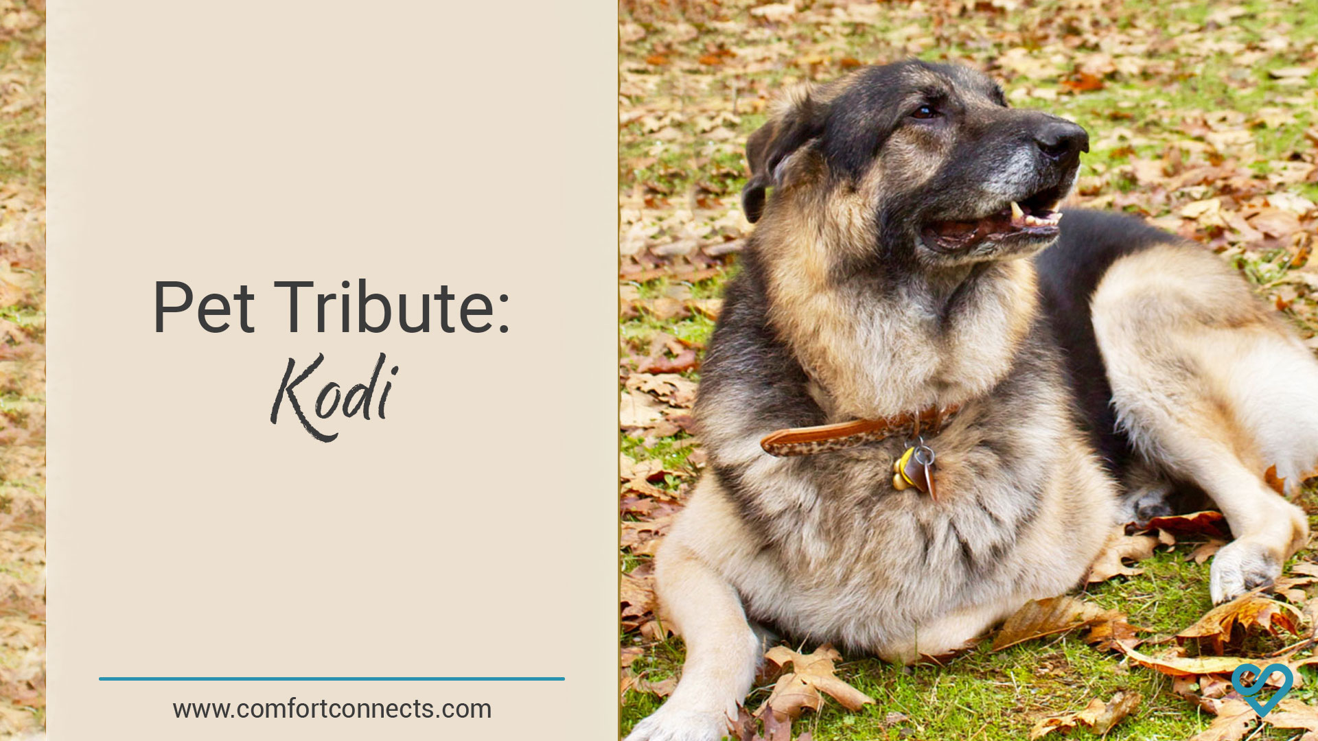 Pet Tribute: Kodi