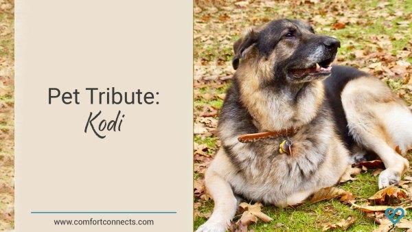 Pet Tribute: Kodi