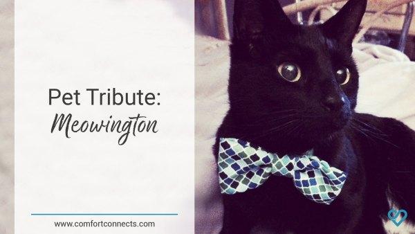 Pet Tribute: Meowington