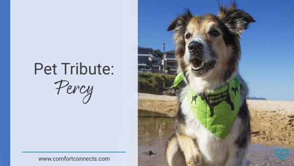 Pet Tribute: Percy