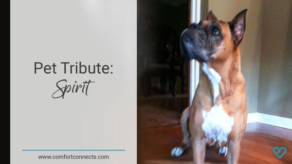 Pet Tribute: Spirit