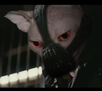 bane_the_cat.png