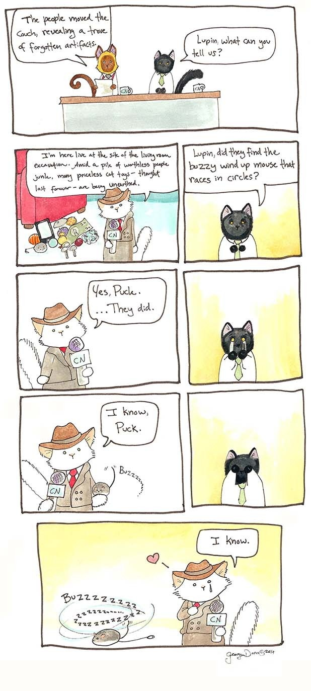 Breaking-Cat-News-08.jpg