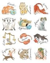 Zodiac Cats by Chloe Cushman