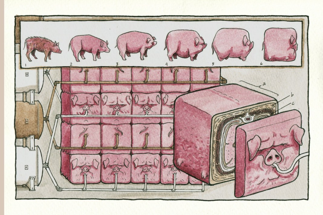 """The 'square pig"""" page from Kate Lacour's Vivisectionary"""