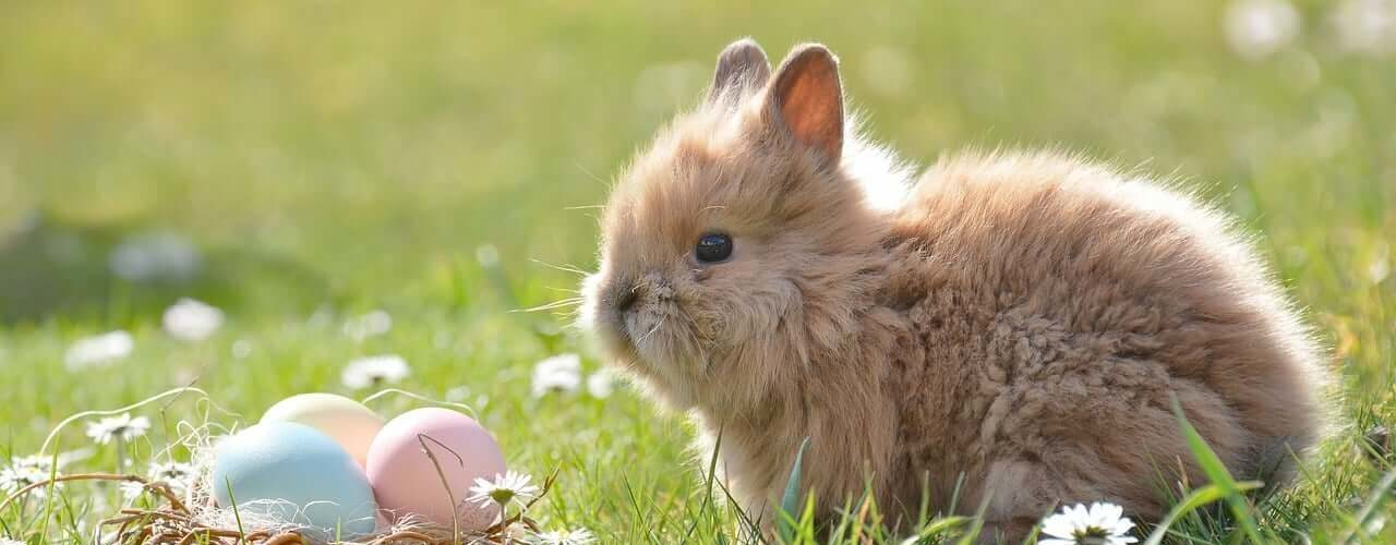 Frohe Ostern! 1