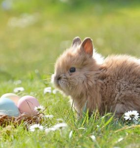 Frohe Ostern! 8