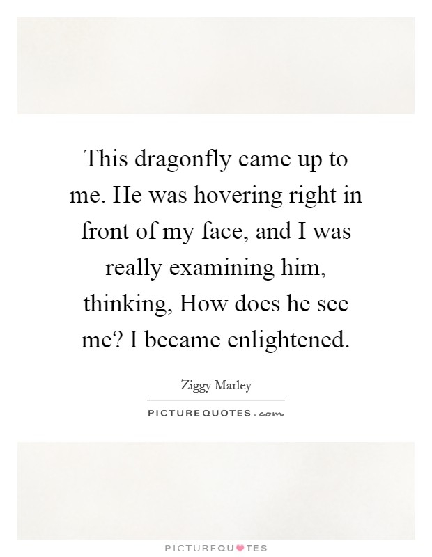 dragonfly quotes dragonfly sayings dragonfly picture quotes
