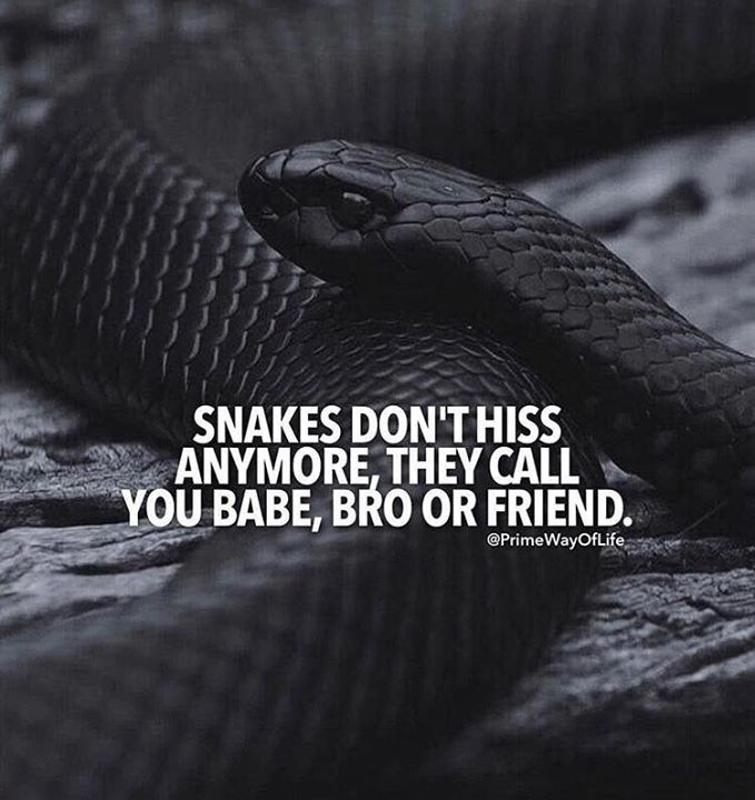 snakes dont hiss anymore galleries snake quotes