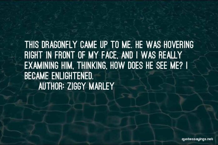 top 52 quotes sayings about dragonfly