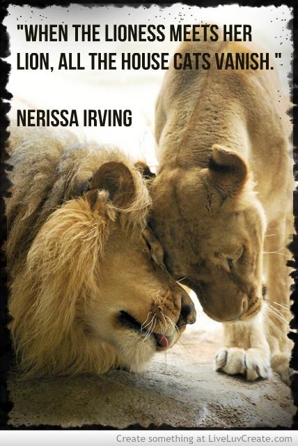 cute lioness quotes quotesgram