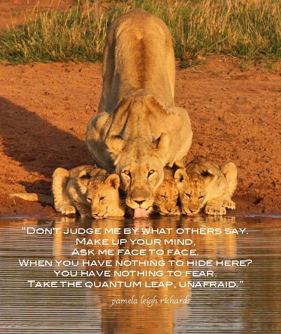 lion and lioness quotes and saying quotesgram