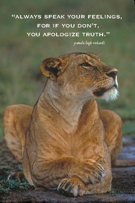 quotes lioness google search lwe zitate inspirierende