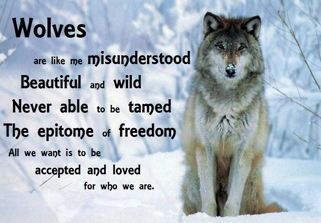 cool lone wolf quotes quotesgram