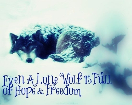 lone wolf quote quote number 610557 picture quotes