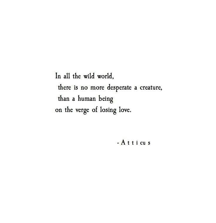 quotes wild wattpad