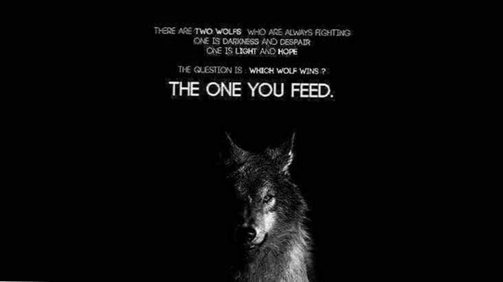 wolf images with quotes wallpapers wolf wallpaperspro
