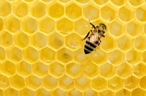 La pequeña pero importante diferencia entre la miel y el azúcar