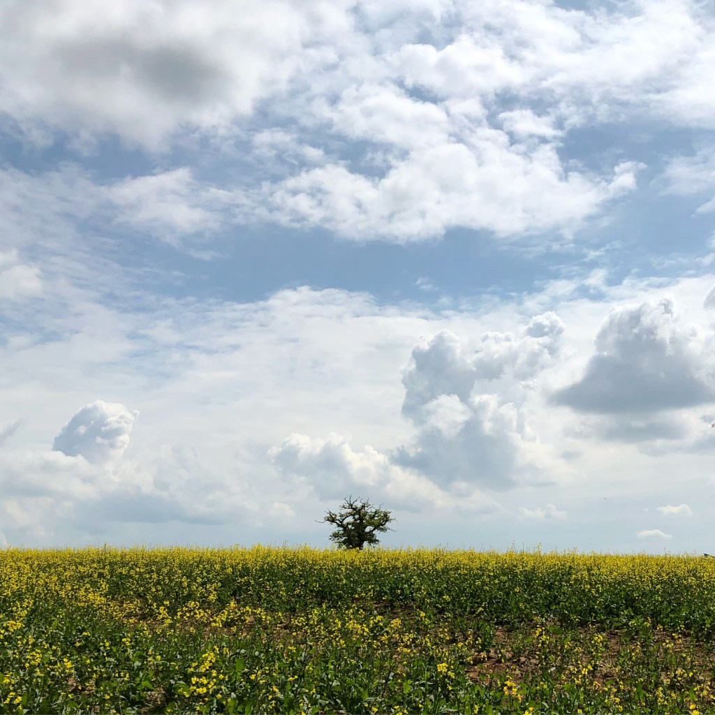 landscape photo of rapeseed field and clouds showing cool blue colour temperature